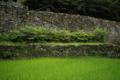 07//08(土 )【愛媛県上浮穴郡久万高原町東川】  「石垣」  Rx