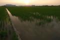 07/12(水 )【愛媛県伊予市下三谷】  「夕日」  Rx