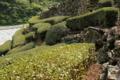 07//15(土 )【高知県吾川郡いの町小川新別】  「茶畑」  V50