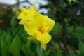 08//15(火)【愛媛県伊予市下三谷】  「夏の花」  Rx