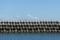 09//03(日)【山口県大島郡周防大島町和田】  「カモメ」  Rx