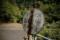 09//10(日)【高知県吾川郡仁淀川町大屋】  「国鉄」  V15