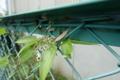 09//14(木)【愛媛県松山市南吉田町】  「バッタ」  Rx