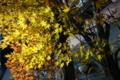 12/19(火)【山口県岩国市麻里布町】  「もみじ」  Rx