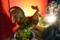 1/10(水)【山口県岩国市麻里布町】  「鳥」  Rx