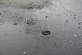 3/19(月)【愛媛県松山市南吉田町】 「雨」 Rx