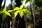 4/30(月)【愛媛県伊予市中山町中山】 「新緑」  V28