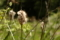 5/20(日)【山口県玖珂郡和木町大字瀬田】 「蒲」 V50
