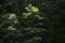 6/2(土)【山口県岩国市六呂師】 「森」 V40