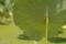 7/16(月)【山口県岩国市尾津町】 「岩国レンコン」  Rx