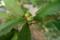 8/26(日)【山口県岩国市麻里布町】 「どんぐり」 Rx