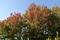 11/5(月)【山口県岩国市日の出町】 「秋」 Rx