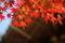 11/11(日)【山口県岩国市室の木町】 「もみじ」 V50