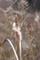 1/13(日)【山口県玖珂郡和木町瀬田】 「蒲」 V50
