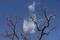 1/18(金)【広島県大竹市東栄】 「枝」 Rx