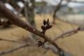 2/22(金)【広島県大竹市東栄】 「花芽」 Rx