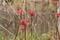 3/24(日)【山口県岩国市川口町】 「新芽」 V50