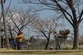 4/3(水)【広島県大竹市東栄】 「花見」 Rx