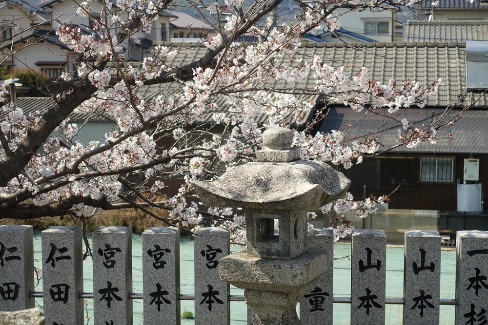 4/4(木)【広島県大竹市東栄】 「神社の桜」 Rx