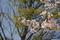4/9(火)【広島県大竹市東栄】 「新緑と桜」 Rx
