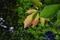 6/6(木)【山口県岩国市麻里布】 「はっぱ」 Rx6