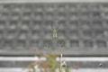 7/24(水)【広島県大竹市晴海】 「蜘蛛」 Rx6