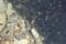 7/27(土)【山口県岩国市楠町】 「アメンボ」 Rx6