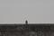 12/11(水)【広島県大竹市晴海】 「一休み」 Rx6