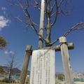 3/23(月)【広島県大竹市東栄】 「対策」 FV