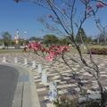 4/24(金)【広島県大竹市東栄】 「ハナミズキ」 FV
