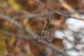11/11(水)【広島県大竹市南栄】 「蜘蛛」