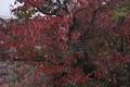 11/17(火)【広島県大竹市南栄】 「赤」