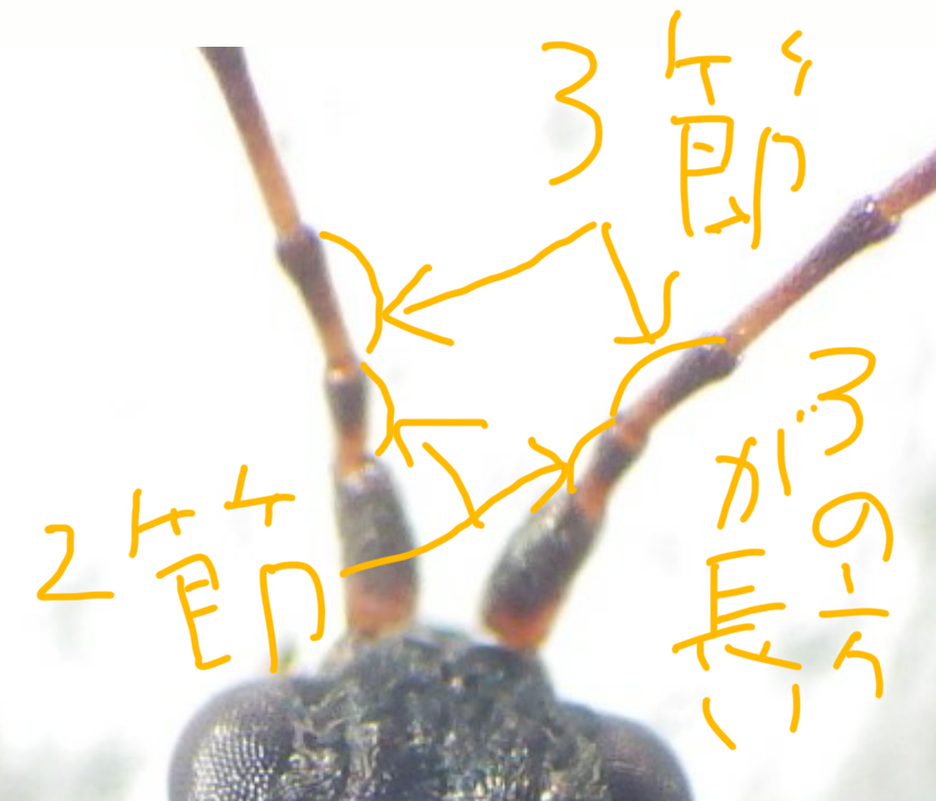f:id:kawaosamushi:20160702145428p:plain