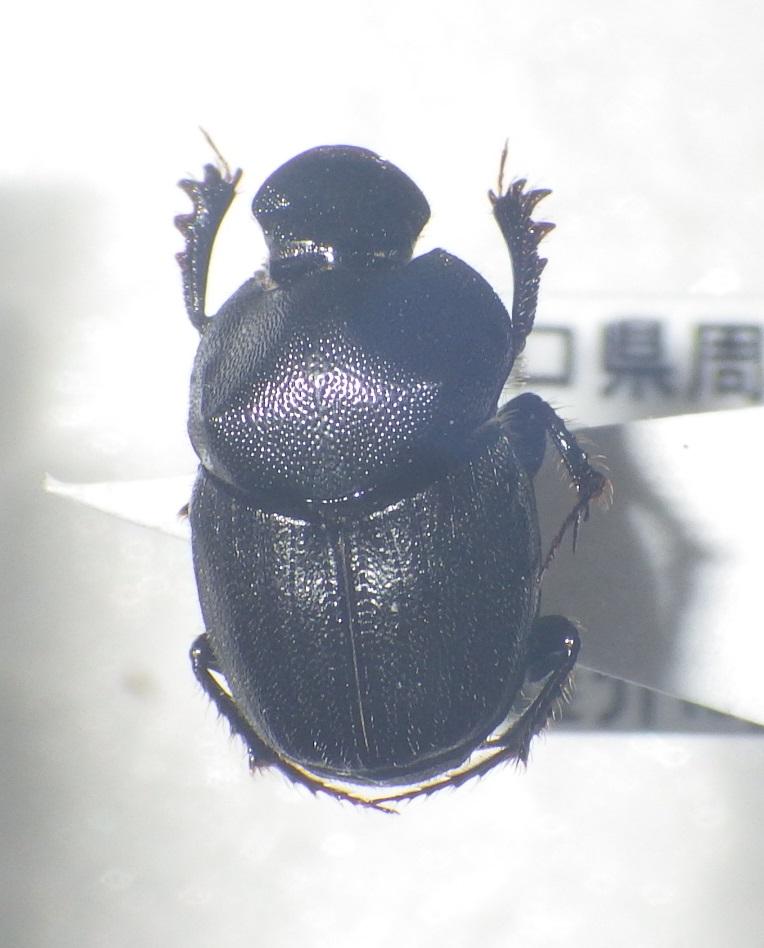 f:id:kawaosamushi:20161218111801j:plain