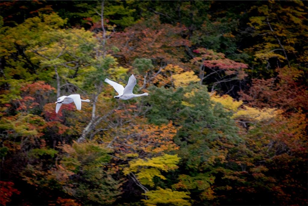 f:id:kawasemi_forest:20201103211420j:image