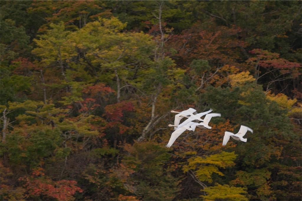 f:id:kawasemi_forest:20201103211643j:image