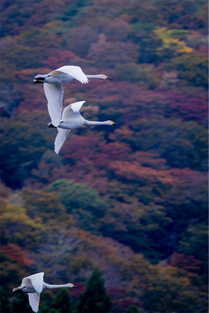 f:id:kawasemi_forest:20201103211702j:image