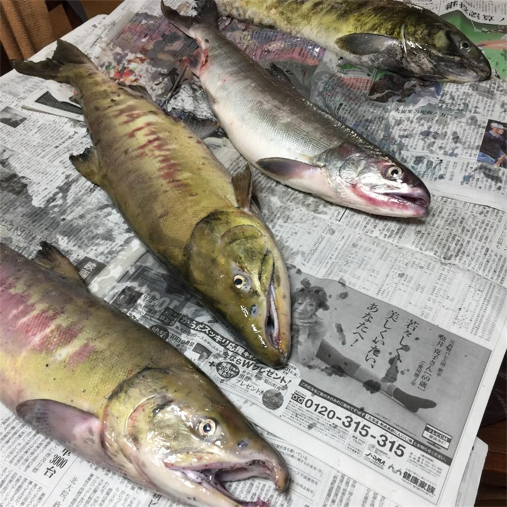 f:id:kawashima-naoya-1203346:20161015180423j:image