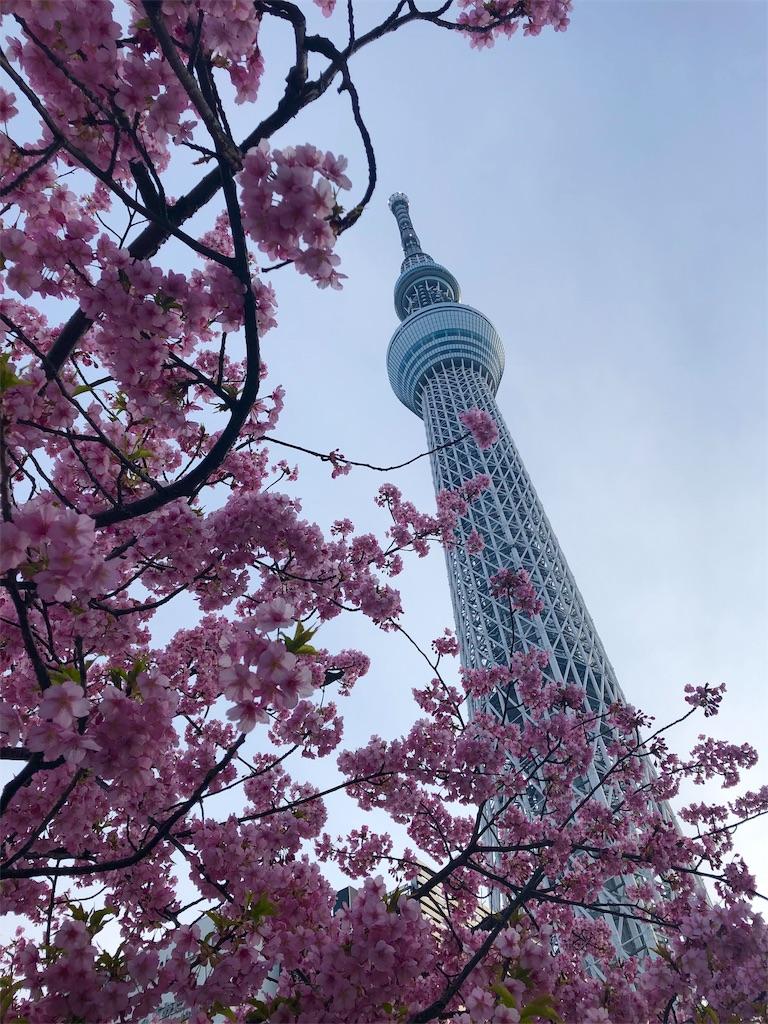 f:id:kawashima-naoya-1203346:20190310144935j:image