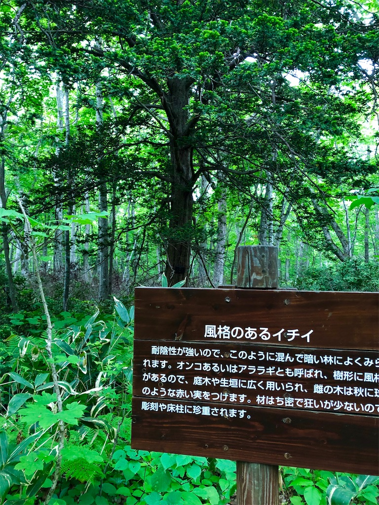 f:id:kawashima-naoya-1203346:20200603195124j:image