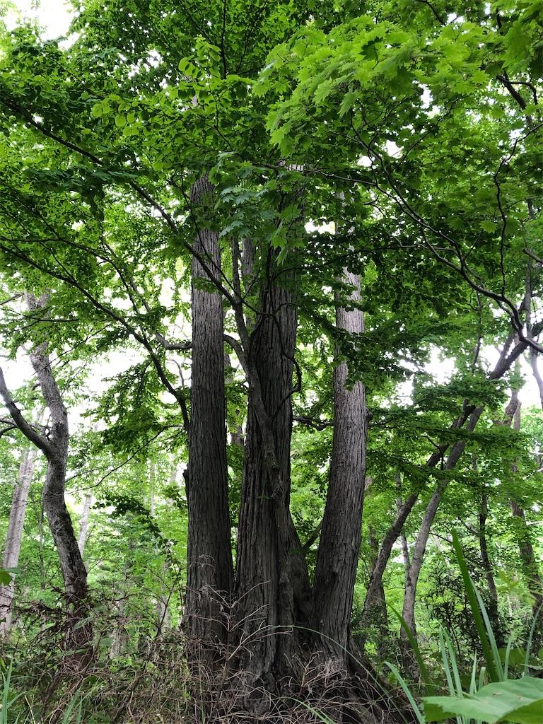 f:id:kawashima-naoya-1203346:20200603195133j:image
