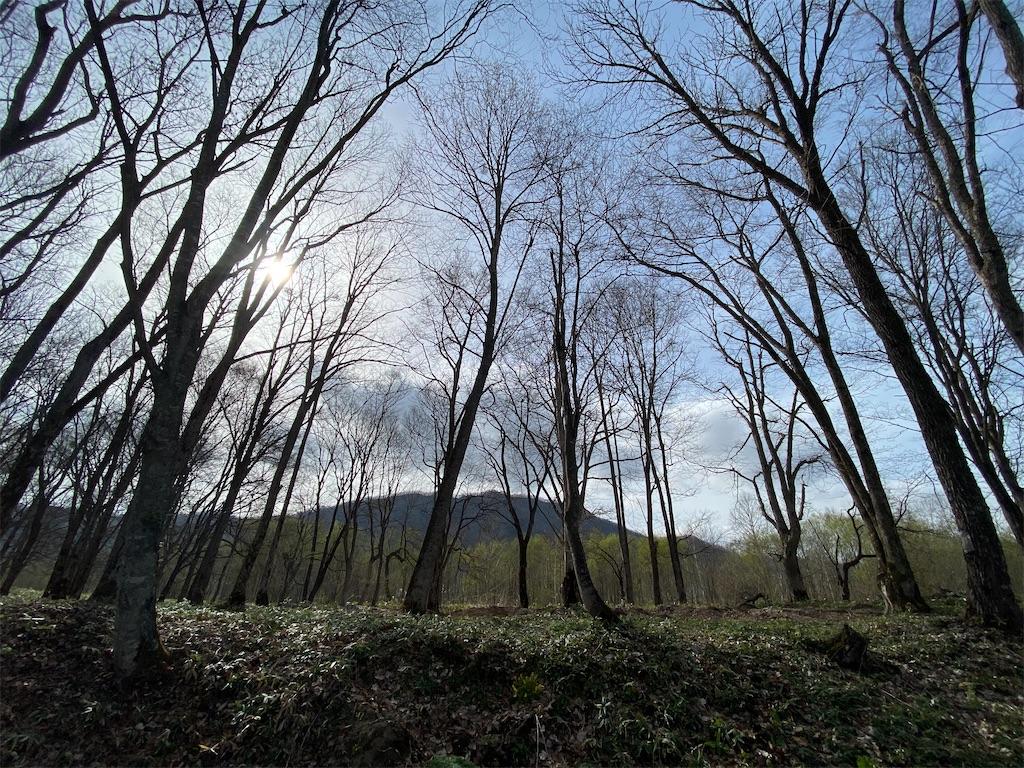 f:id:kawashima-naoya-1203346:20210505145902j:image