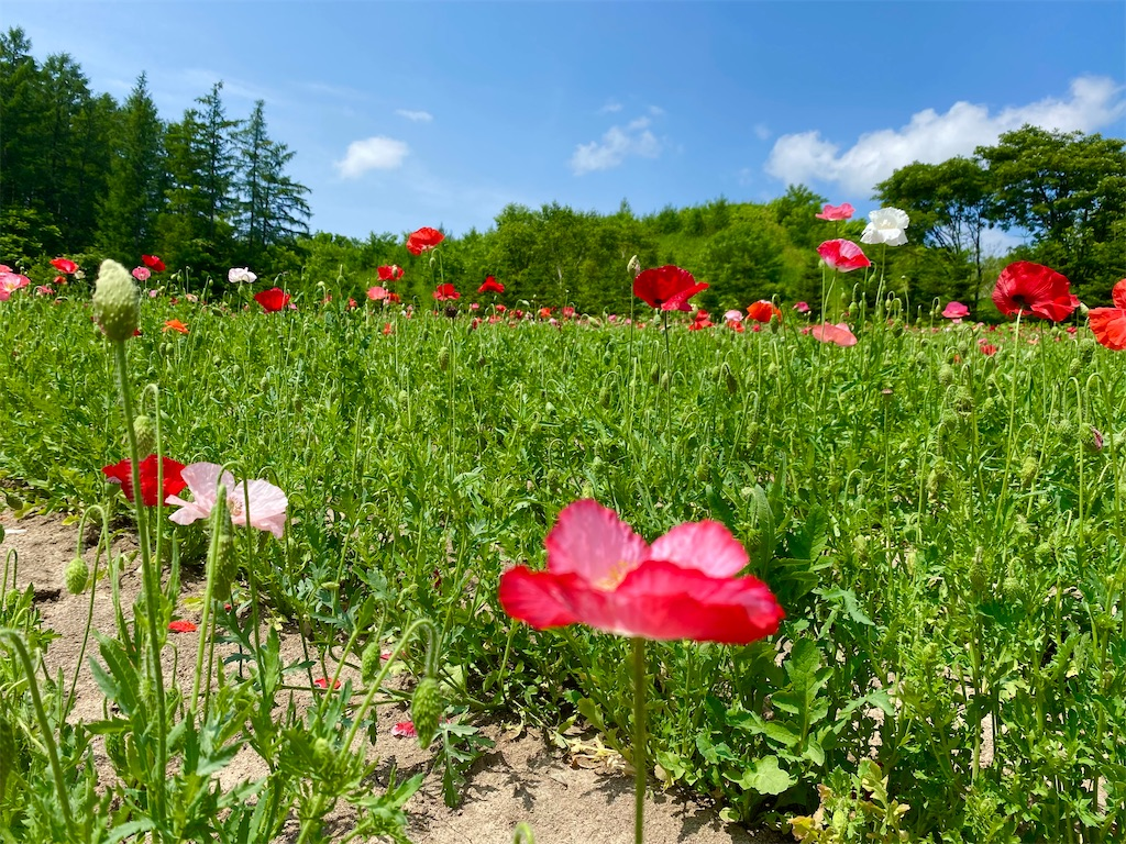 f:id:kawashima-naoya-1203346:20210704171845j:image
