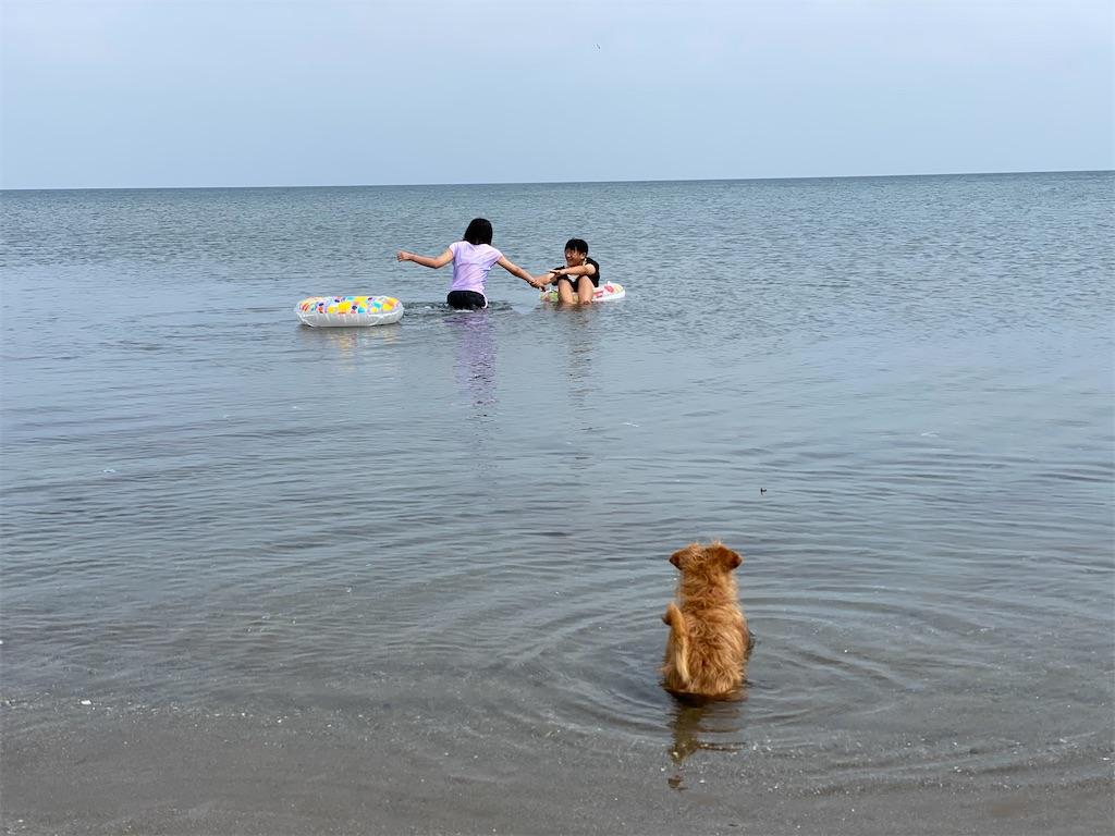 f:id:kawashima-naoya-1203346:20210723064056j:image