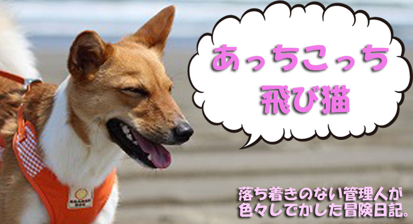 f:id:kawashimachiyo:20170316192227j:plain