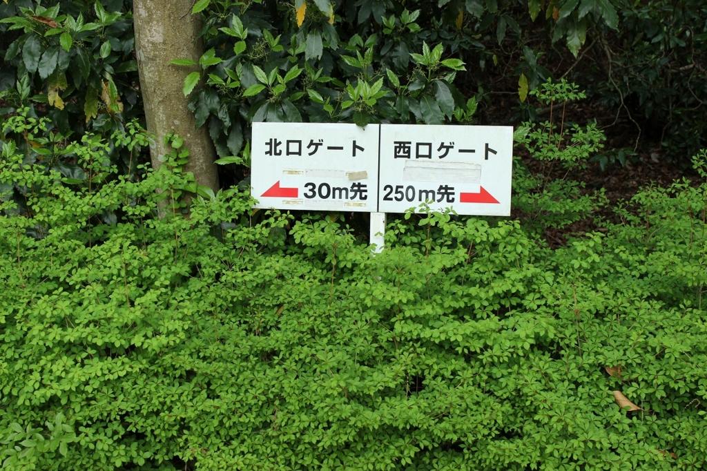 f:id:kawashimachiyo:20170509182348j:plain