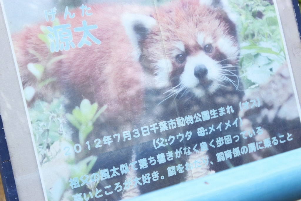 f:id:kawashimachiyo:20170509184410j:plain