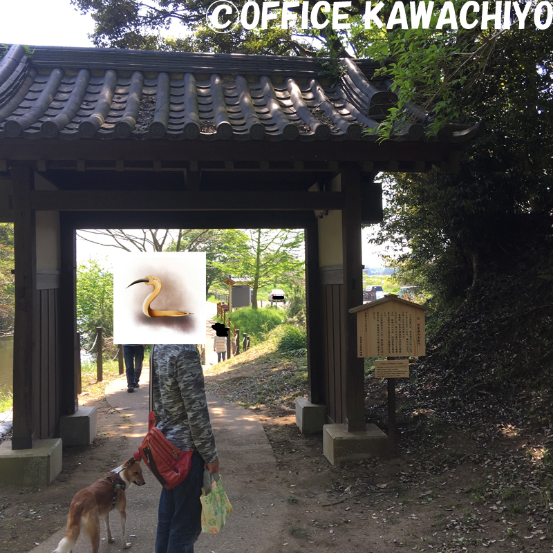 f:id:kawashimachiyo:20170522150243j:plain
