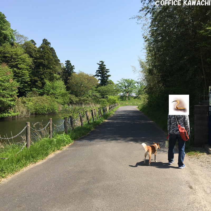 f:id:kawashimachiyo:20170522151929j:plain