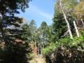 3合目付近 青空と緑と紅葉
